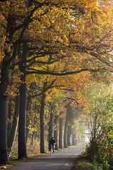 "November Bicycle Commute 2 of 4 (beeldmark) Tags: vroegeochtend weg nederland fiets woonwerk zonnig landschap provincieutrecht thenetherlands オランダ commute landscape netherlands road sunny bicycle cycling dawn earlymorning fietsen ochtendstond zeist utrecht nl beeldmark pentax k5 ""hd pentaxda 1685mm f3556 ed dc wr"" hdpentaxda1685mmf3556eddcwr"