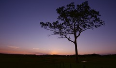 Anambah Road (Fietas Guy) Tags: nikon windella lowerhunter huntervalley nsw anambah 1635mm d810 beautiful sunset tree