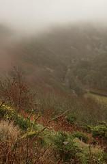 Foggy Exmoor Fellside (EmPhoto.) Tags: foggy exmoor uk winter landscapepassion emmiejgee sonya7rm2 hike malmsmead oarewater valley wild unspoiled unspoilt