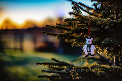 Abandoned Bear (jayneboo) Tags: christmas tree outside decoration light bokeh garden noctilux 50mm adapted morning sun sunrise bear branches pine needles