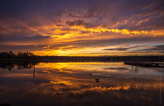 Ducks Cruising at Sunset (www.mikereidphotography.com) Tags: seattle fuji gfx50s sunset greenlake zeiss 18mm mediumformat reflection clouds sun sky
