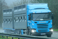 Scania Livestock Transporter in the rain (SR Photos Torksey) Tags: transport truck haulage hgv lorry lgv logistics road commercial vehicle freight traffic scania livestock