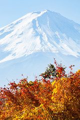 Kawaguchiko Lake in Autumn (Japan) - Snow-capped Mt Fuji (partial view), blue sky and maple leaves in autumn colors. (baddoguy) Tags: asia autumn leaf color awe backgrounds beauty in nature blue closeup image cone contrasts copy space famous place frame fujikawaguchiko horizontal incomplete international landmark japan lake kawaguchi local majestic maple tree mt fuji national nonurban scene orange outdoor pursuit part of photography red satoyama scenery scenics season shape sky snow snowcapped mountain tourism tranquil tranquility travel destinations volcano wallpaper decor white yamanashi prefecture yellow
