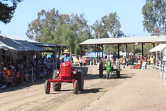 2018 Fall Tractor Show (AGSEM1976) Tags: engines tractors vista agsem museum agriculture cars vintage fixerupper case caterpillar johndeere farmall farm mill rumley 1912 pull parade video gas steam old oil holt advance white fall tractorshow socal san diego north county