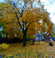 """""""Start where you are. Use what you have. Do what you can.""""  - Arthur Ashe (Trinimusic2008 -blessings) Tags: trinimusic2008 judymeikle nature trees autumn fall toronto to ontario canada november 2018 outdoors leaves colour color yellow playground sonydschx80"""