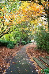 Sherdley Park (Steve Samosa Photography) Tags: park autumn autumntrees sherdleypark sthelens leaves nature england unitedkingdom gb