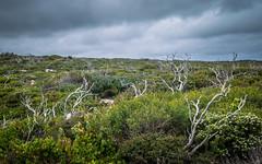 Closing in (andyscho2004) Tags: coastalheath remarkablerocks southaustralia sa kangarooisland ki australia au heath remote desolate windswept cloudy foreboding overcast green grey nature nikon d7100 wilderness
