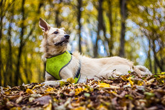 Tzuki (Pan.Ioan) Tags: dog domestic pets animal canine mammal nature outdoors trees leaves autumn colorful