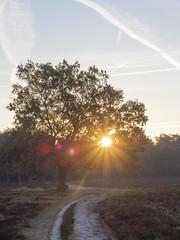 Bussumerheide 2018: Christmas tree (mdiepraam) Tags: bussumerheide 2018 bussum westerheide heath earlymorning dawn sunrise tree branch heather flares backlight sky contrails