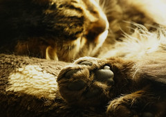 A Moments Paws (JamieHaugh) Tags: cat kitty rio feline sony ilce7rm2 zeiss bokeh alpha a7rii pussy moggy colour color blur focus paw meow moment reflect portrait fur hair animal