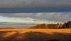 Obendorf (kadege59) Tags: exdorf mitteldeutschland wow wonderfulnature weather thüringen thuringia canon canonpowershotsx230hs outside clouds cloudy sky sun yellow field forest trees autumn obendorf