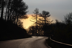 Down the road (Horajko) Tags: road mountain serpantine sea sunset shine glittery gold forest park trees autumn