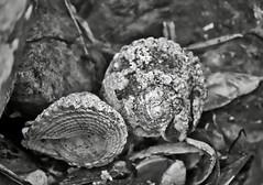 Hidden shells, Day's Bay - Eastbourne, New Zealand (doctora85) Tags: water coast ocean beach sea sand shells