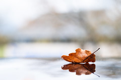 Tombent les feuilles (Nathalie Falq) Tags: aveyron france midipyrenees montrozier occitanie projet52 automne feuille flore formatpaysage macro proxi saison fujifilmxt2 xf60mmf24rmacro fujifilm
