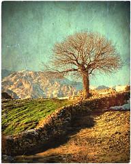 💛 - K U R D I S T A N -كوردستان🌟 (Kurdistan Photo كوردستان) Tags: كوردستان🌟 life کوردستانی کورد kurdistan کوردستان land democratic party koerdistan kurdistani kurdistán kurdistanê zagros zoregva zazaki zaxo zindî azadî azmar xebat xaneqînê christianity cegerxwin van love mahabad music arbil democracy freedom genocide herêmakurdistanê hawler hewler hewlêr halabja herêma judaism jerusalem kurdistan4all lalish qamishli qamislo qamishlî qasimlo war erbil efrînê refugee revolution rojava referendum yezidism yazidis yârsânism unhcr peshmerga peshmerge grass tree landscape field sky