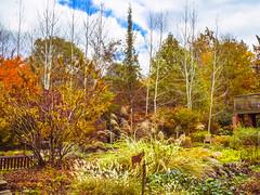 Autumn Serenade (David Cornwell) Tags: elkhartcounty indiana usa biodiversity ecology flowersplants geotagged landscape map mapped nature