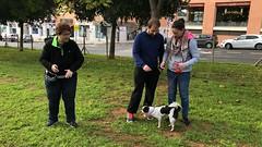IMG_8593 (Doggy Puppins) Tags: educación canina adiestramiento canino perro dog