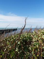 Aberystwyth (Dubris) Tags: wales ceredigion aberystwyth seaside coast