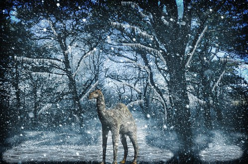 Camel in the Forest in the Snow