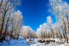 Frost Giants (stevenbulman44) Tags: sky calgary frost polarizer 2470f28l lseries winter cold ice tree forest landscape white color pattern canon