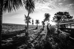 Palms on The Hoe (NikNak Allen) Tags: plymouth devon plymouthhoe smeatonstower smeaton tower lighthouse plymouthlighthouse palmtrees trees grass sky sun clouds sunrise morning early wide light shadows grey greys black white blackandwhite shelter landscape longexposure