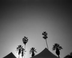 Pyramid Palms (tobysx70) Tags: rollei expired single use disposable plastic camera 35mm 135 blackandwhite bw film rollfilmweek january 2019 pyramid palms los angeles california ca palm tree silhouette sun tents day3 toby hancock photography