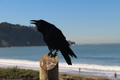 Baker Beach (jjandames) Tags: bakerbeach sanfrancisco california 2019 goldengate january