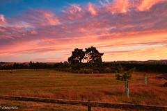 190128 205335 (Vibeke Friis) Tags: martinborough wellingtonregion newzealand nz