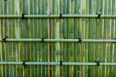 Fresh bamboo wall (phuong.sg@gmail.com) Tags: abstract architecture asia asian background bamboo bark bind bough branch brown bunch bundle closeup culture decor design detail fence jungle line natural nature organic oriental pattern pipes place plant round stick texture textured together traditional tree tropical twig wall wallpaper wood yellow