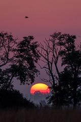 Dawn (Kristóf Diós) Tags: sunrise dawn mood landscape buzzard common great hungarian plain grassland sun rising rise táj tájkép napkelte napfelkelte természet természetfotó magyar magyarország hungary egerészölyv