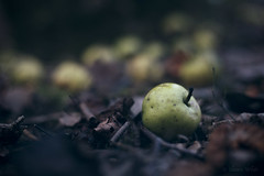Woodland Floor (shawn~white) Tags: 50mm canon6d ef50mmf18stm nik nature apple apples autumn bokeh cold cool crabapple dark dreamy enchanting fall fallen forest fruit leaves melancholy moody nostalgia wood woodland woods ©shawnwhite