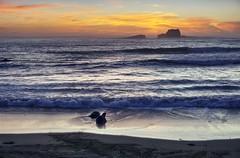 Blue hour at California coast (PeterThoeny) Tags: elephantsealvistapoint sansimeon california usa beach ocean water wave coast shore sky cloud cloudy seascape outdoor bluehour dusk night sony a6000 selp1650 2xp raw photomatix hdr qualityhdr qualityhdrphotography fav100 elephantseal vistapoint seal sunset sea sand