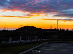 Mississauga, Ontario (TO416 Original) Tags: 2018 brampton canada motoroilphotography ontario to416 transport travel mississauga ca sunrise tofouronesix to416original