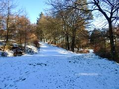 Tracks, Blaen Bran, Upper Cwmbran 23 January 2019 (Cold War Warrior) Tags: blaenbran track woodland cwmbran snow