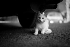 Burger (~ Jessy S ~) Tags: animal pet pets animaux cat kitty kitten cats cute little mignon kawaii portrait nikon nikkor d750 50 50mm 18 love sweet
