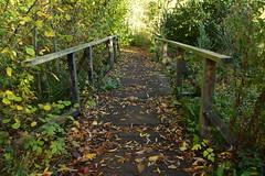 Plantsbrooke Nature Reserve, (Manoo Mistry) Tags: nikon nikond5500 tamron tamron18270mmzoomlens plantsbrooknaturereserve naturereserve openspace parks