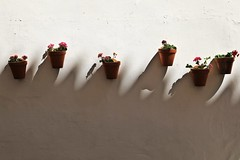 Macetas (just.Luc) Tags: macetas bloempotten flowerpots blumentöpfe potsdefleurs shadow schaduw ombre schatten pelargonium pelargonien spain spanje espagne españa spanien andalusië andalucía andalusien andalousie andalusia sevilla seville séville siviglia flowers bloemen fleurs blumen