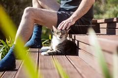 pupu on the deck (hueymilunz) Tags: cat pet portrait pupu light life newzealandtransition newzealand nz wellington season summer