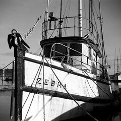 Zebra (bac1967) Tags: beerenol beerol beerfilmdeveloper beer henryweinhardsbeer henryweinhards pacificnorthwest pnw washington washingtonstate wa blackandwhite blackandwhitefilm bw monochrome monotone panfilm ilfordhp5 ilfordfilm ilford nautical ship boat fishingboat zebra vintage oldboat vintageboat nauticaldecay 127film 127rollfilm 127 4x4