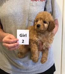 Kizzie Girl 2 pic 2 12-9