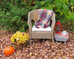 IMG_0411 (Deeber71) Tags: autumn woods plaid autumnal wicker nature outdoors pumpkin