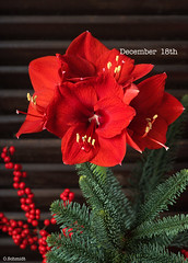 December 18th (sch.o.n) Tags: