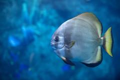 Aquarium of the Pacific. (LisaDiazPhotos) Tags: aquarium pacific fish lisadiazphotos