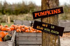 Pumpkin_Patch_11102018-15 (VisitChampaignCountyPhotography) Tags: curtisorchard pumpkins