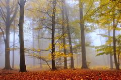 Nella nebbia...... (Marco Allegro) Tags: italy