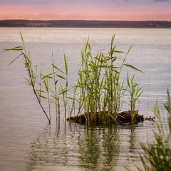 Sunrise at the sea (Martin Bärtges) Tags: drausen outdoor outside gras grass farbenfroh colorful wasser see sea water nikonphotography nikonfotografie d7000 nikon naturephotography naturfotografie natur nature sonnenaufgang sonne sonnenschein sunshine sunrise sun