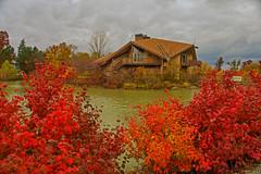 Last colors of fall (Gaby Swanson, Photographer) Tags: ohio fall colorful leaves autumn nature naturephotography mageemarshwildlifearea landscape oh ohlandscape ohiolandscape