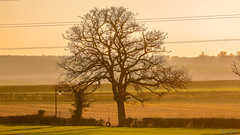 Nettle hill Circular Walk 18th November 2018 (boddle (Steve Hart)) Tags: stevestevenhartcoventryunitedkingdomcanon5d4 nettle hill circular walk 18th november 2018 steve hart boddle steven bruce wyke road wyken coventry united kingdon england great britain canon 5d mk4 6d 100400mm is usm ii 2470mm standard wild wilds wildlife life nature natural bird birds flowers flower fungii fungus insect insects spiders butterfly moth butterflies moths creepy crawley winter spring summer autumn seasons sunset weather sun sky cloud clouds panoramic landscape rugby unitedkingdom gb