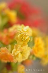 Cores (✿ Debora ✿) Tags: flores yellow red flower nikond5200 spring kalanchoe nikkor