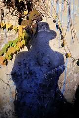 L'ombre du voleur d'éternité (Tonton Gilles) Tags: graphisme ombre autportrait chapeau mur lierre